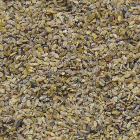 Aspen Seed Close Up