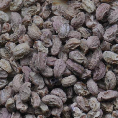 Crataegus douglasii  –  Douglas Hawthorn