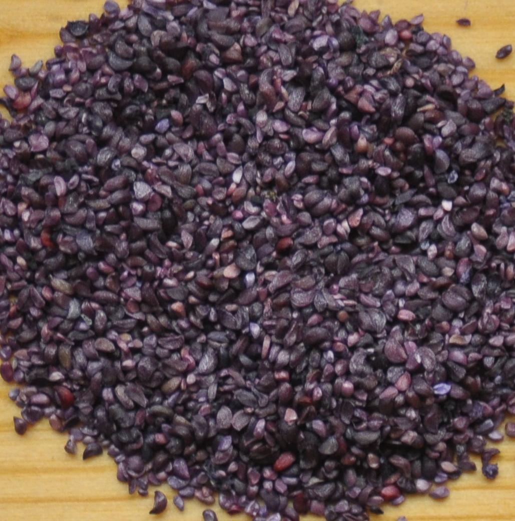 Huckleberry Seeds Close Up